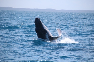 whales 090