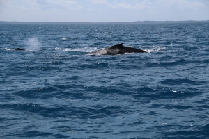 whales 098